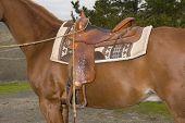 Horse With Western Saddle