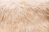 Natural Furry Background poster