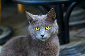 Cat Pictures, Cat Eyes, Pictures Of The Most Beautiful Cat Eyes, Cute Cat, Innocent Cat Pictures, Cl poster