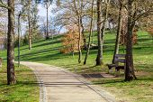 Garden or park bench near an empty dirt path, track, trail or pathway through the trees and green gr poster