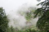 Nebel nach Regen in wilden Wald