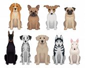 Colorful Set Of Dogs Of Different Breeds. Domestic Animals. Home Pets. Graphic Design For Poster Of  poster