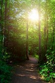 The sun shining through the trees in the Haunted Woods in PEI National Park, Prince Edward Island, C poster