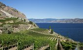 Scenic view of vineyard with lake and mountains