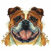 Watercolor Printshop, Print On The Theme Of The Breed Of Dogs, Mammals, Animals, Breed English Bulld poster