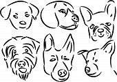 Dog Face Sketches