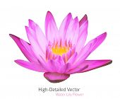 Zen Flower Lotus. Vector Water Lily Illustration, beautiful tropical plant.