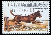 AUSTRALIA - CIRCA 1980: A stamp printed in Australia shows Australian Kelpie Dog, circa 1980
