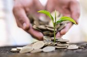 Hand Giving A Golden Coin To A Tree Growing From Pile Of Coins,  Green Businesstree Growing From Pil poster