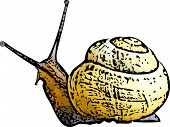 Yellow Shelled Snail Illustration