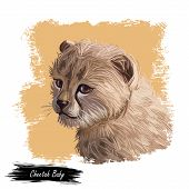 Cheetah Baby Tabby Cat From North Africa Isolated Digital Art Illustration. Southeast African Little poster