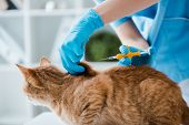 Cropped View Of Veterinarian Doing Implantation Of Identification Microchip To Red Tabby Cat poster