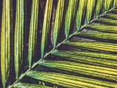 Closeup Beatiful Green Palm Leaf With Sunlight Shining On The Palm Leaves,palm Branches With Green L poster