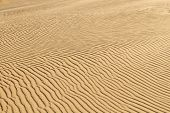 Desert sand background of a Curonian Spit dune