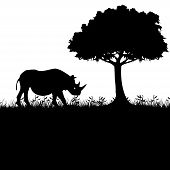 Rhinoceros In Nature. Illustration Of Silhouettes Of Rhinos In Nature As A Symbol Of The Protection  poster