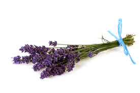 picture of lavender field  - Bunch of fresh lavender on bright background - JPG