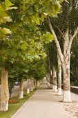 Plane Tree Alley