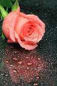 Rose With Water Droplets On Glass