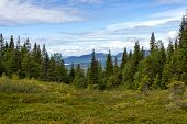Beautiful Forest Landscape In The Kola Peninsula, Russia