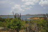 Bonito Bonaire