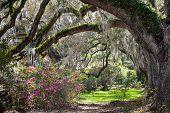Charleston, SC Spring Scenic Landscape