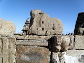 Nandi, Mamallapuram Shore Temple (India)