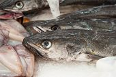 image of hake  - fresh hake at a fish market healthy eating - JPG
