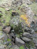 Cliff Stream Waterfall