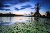 stock photo of ponds  - beautiful australian landscape at twilight with lily pond in foreground  - JPG