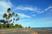 Palms At Sea Coast