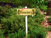 Rosemary Herb Garden Sign