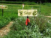 Sage Herb Garden Sign