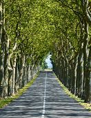 Road Near Carcassonne (france)