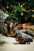 Dogs And Christmas Tree