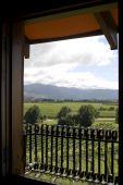 Vineyard In Marlborough
