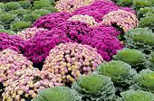 Mums And Kale Kaleidoscope