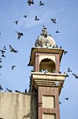 Historical Tower With Pigeons In Amritsar,india
