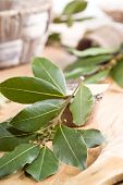 picture of bay leaf  - Bay. Branch of laurel leaves. Food background