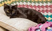 Black cat on pillow with afghans on couch.