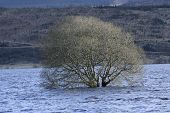 picture of carron  - A flooded tree keeps it branches above water at Carron Reservoir - JPG