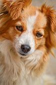 Portrait Of A Cute Cross-breed Dog