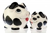 stock photo of cash cow  - Two money saving pigs mother and baby in black and white cow print looking to each other - JPG