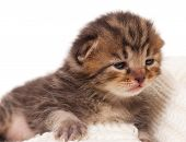 Neonate Kitten