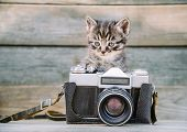 picture of kitty  - Little cute kitten with vintage photo camera on a wooden table - JPG