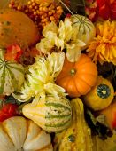 Autumn Gourds and Flowers