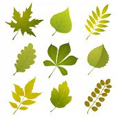 green leaves icons over white background