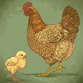 Vector Illustration Of Engraving Chicken And Chick