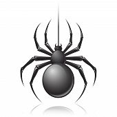 stock photo of black widow spider  - Black scary spider insect isolated on white background emblem vector illustration - JPG