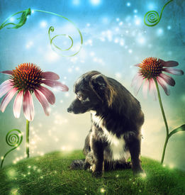 pic of chiwawa  - Black dog in a fantasy hilltop landscape with echinacea flowers - JPG