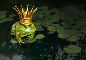 stock photo of fairies  - Frog prince concept with gold crown representing the fairy tale concept of change and transformation from an amphibian to royalty on a lily pad pond background - JPG